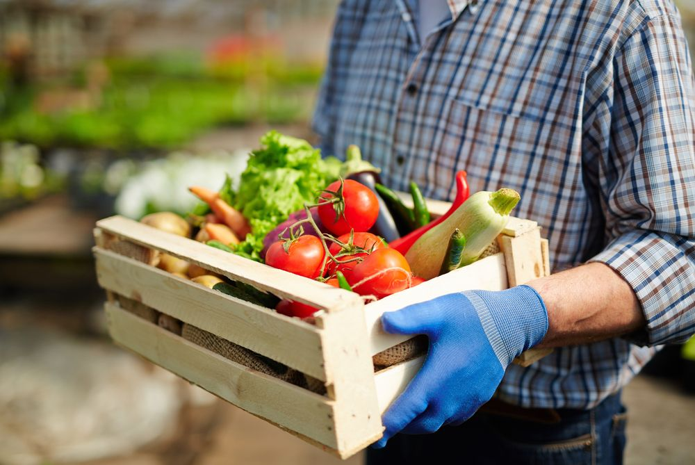 Best Farm Box Delivery: Fresh Organic Produce Delivery Service At Your Doorstep